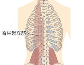 脊柱起立筋が原因の腰痛
