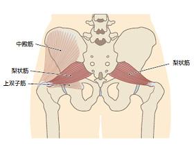 しこり 股関節